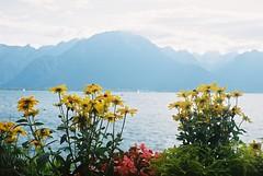F1000010 (carolinadossantos) Tags: yashicaelectro35 kodakektar100 montreux switzerland flowers lake garden mountains leman geneva alps