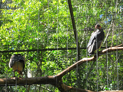 "Le Parc des Oiseaux d'Iguaçu <a style=""margin-left:10px; font-size:0.8em;"" href=""http://www.flickr.com/photos/127723101@N04/29532153052/"" target=""_blank"">@flickr</a>"