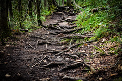 A path of roots (michaelraleigh) Tags: path 50mm northshore landscape lakesuperior highquality eaglemountain canon pinetrees national superiornationalforest secluded statepark summer f18 serene beautiful bwca infocus boundarywaters trail outdoors green lake roots bokeh minnesota