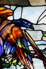 Morse Museum (ktmqi) Tags: stainedglass louisctiffany florida winterpark morsemuseum decorativearts plumtree birds josephbriggshouse