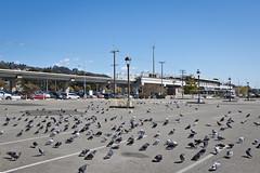Birds of a Feather (Ron Rothbart) Tags: bart california delnortebart elcerrito jeffbrouws commutertrain parkinglot