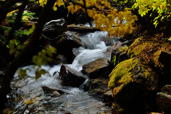 Babbling Fall Brook (JasonCameron) Tags: autumn fall forest mountains utah river flow long exposure