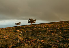 Quei due alberi sulla montagna - Those two trees on the mountain (da.geli) Tags: trees sky italy mountain landscape umbria mygearandme mygearandmepremium queiduealberisullamontagna parcodemontesubasio