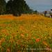 中正小菊_5d-20121104-36-17-nik.jpg