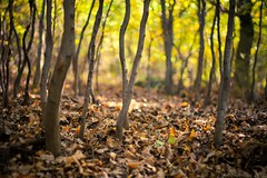 Relaxing forest (icemanphotos) Tags: autumn trees fall colors leaves yellow 50mm golde
