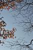 Looking right to my future self (Howard L.) Tags: autumn leaves foliage howd oaklandlake oaklandgardens howardlaudesign