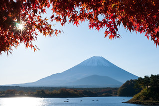 Maple tree and Mt.Fuji