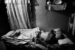 Crete (Vasilikos Lukas) Tags: family blackandwhite dog blancoynegro night blackwhite father uncanny vasilikos 5dmkii lukasvasilikos
