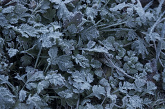 Frost (nag #) Tags: morning autumn winter plants plant flower texture ice field grass weather landscape botanical frozen earth freeze land material wildgrass