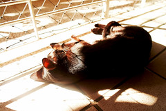 Chillin' (luceknight) Tags: light pet cats pets sun sunlight playing cat blackcat lights evening kitten apartment floor kitty samsung kittens indoors catplaying nx11 rememberthatmomentlevel1