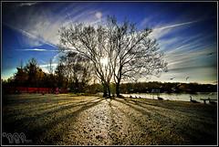 Sunny Tree (mad-dan2011) Tags: england sun tree water manchester wildlife shaddow tamron urbex 10mm sonyalphadslr