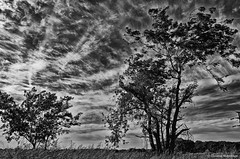 The beating of my heart .. / El latir de mi corazón ... (Claudio.Ar) Tags: trees sky blackandwhite bw santafe tree nature argentina clouds landscape nikon topf75 bn pampa d7000 claudioar claudiomufarrege nikkor18105mmf3556gedafsvrdx