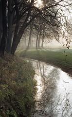 Ruiten Aa (Jos Mecklenfeld) Tags: leica mist film netherlands misty fog forest 35mm river landscape kodak groningen c2 bos landschap terapel rivier westerwolde colorplus kodakcolorplus ruitenaa epsonv500 leicac2