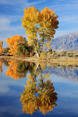 Forgotten Fall (bertdennisonphotography) Tags: california blue autumn sky lake tree fall nature water colors canon reflections landscape pond bishop inyocounty farmerspond