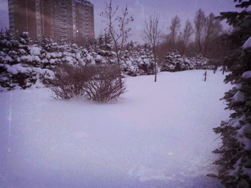 snow ©  quirischa