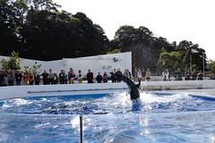 (ddsnet) Tags: travel animals japan dolphin sony  nippon   nihon   kyushu backpackers  nex     publicaquarium  nagasakiken mirrorless      watermesozoic   newemountexperience nex7  aquaticorganisms