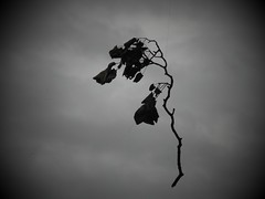 Natures Illusion in B & W II (NickyG8) Tags: trees abstract nature leafs yahoo:yourpictures=yourbestphotoof2012