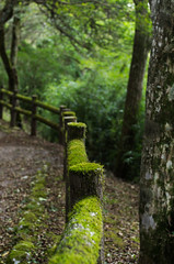 Mossy Fence (dtra) Tags: tree green japan forest fence garden moss hakone