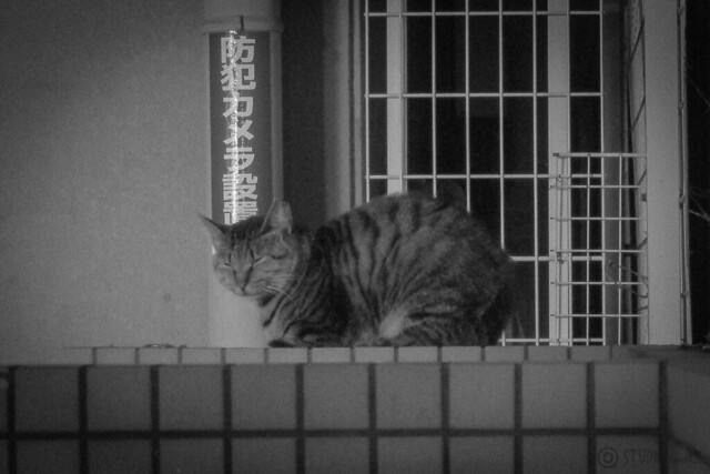 Today's Cat@2012-12-06