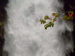 Branch into the waterfall (Germán Vogel) Tags: white japan contrast waterfall asia branch foam nikko tochigi eastasia kegon kegonfalls chuuzenji