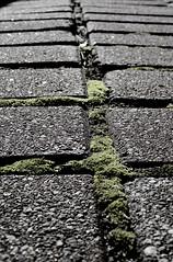 Depth of a Brick Walkway (*Abstrax) Tags: brick stone moss bokeh bricks sidewalk walkway cube block cinderblock depth brickwork slab