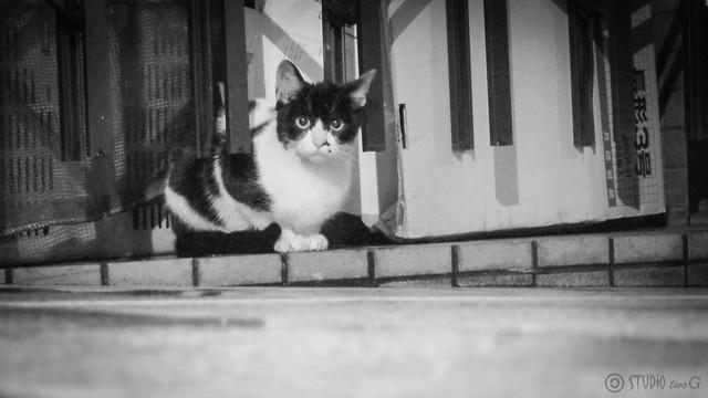 Today's Cat@2012-12-17