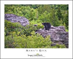 Mama's Rock (DKNC) Tags: roughridge blueridgeparkway northcarolina nc bear wildlife nature animal daleking