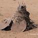 Nyangatom still life