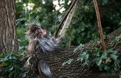 Grotto (Shirleys Studio | Handmade Art Dolls) Tags: shirleysstudio shirleys studio beeldende kunst art artist grotto troll ooak dolls trollen trolletjes boswezens fantasy doll artdoll trol trolls figurine handmade