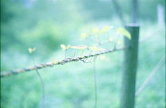greem (.) Tags: japan nature summer plants green      film pentaxsp pro400h