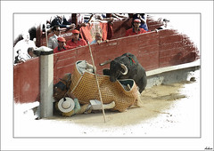 Tauromaquia I (V- strom) Tags: lidia toros picador fiesta tradicin ventas madrid textura luz color espectculo espaa