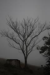 #336 of 365 days - Obscure fog (Ruadh Sionnach) Tags: nature natur natureza naturaleza tree fog neblina rvore seca field valley farm fazenda rural campo ranch rancho rustic obscure paganism pagan druidism druidismo druid celtic plant plants planta plantas