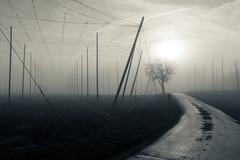 Good Evening (Jens J. Hoffmann) Tags: landscape nikon d750 bw blackwhitephotos mood sw urban himmel wolke outdoor landschaft splittone