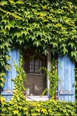 Pas dappellation plein air .. (GK Sens-Yonne) Tags: fentre volet faade reflet poule