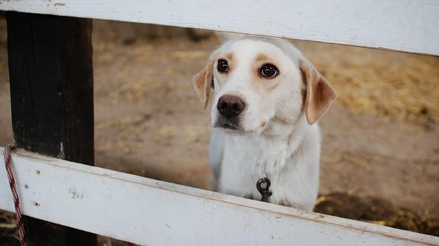 白い犬の夢の意味と心理|好きな人/2匹/なつく/なでる/出産【夢占い】