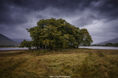 Loch Awe Copse (ben.leng) Tags: lochawe loch trees copse highlands grass autumn cloudy wet windy stormywater rain oban wild nature scotland nikon sigma manfrotto doh iso