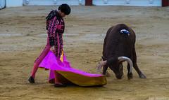 Scenes From Spain (Fotomondeo) Tags: matador torero toro toros corridadetoros bullfight bullfighter bullring hoguerasdesanjuan alicante spain espaa cayetanoriveraordez