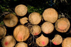 ckuchem-8290 (christine_kuchem) Tags: abholzung baum baumstmme bume einschlag fichten holzeinschlag holzwirtschaft wald waldwirtschaft