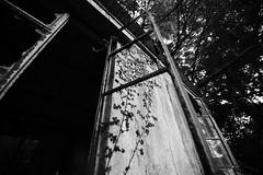 Window? (KennY ) Tags: frame window broken break school time plant lonely ruins