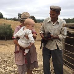 baby a2 and baby pig (Rosa Pomar) Tags: porco porquinho