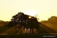 Morgensonne trifft Nebel (grafenhans) Tags: nebel sony tamron bäume sonnenaufgang grafenwald 281750 slt55