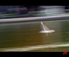 Rve du matin (mamnic47 - Over 6 millions views.Thks!) Tags: paris jardindestuileries mouettes img3503 effetfil