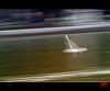 Rêve du matin (mamnic47 - Over 8 millions views.Thks!) Tags: paris jardindestuileries mouettes img3503 effetfilé