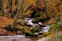 Otoo dorado / Golden Autumn / Goldener Herbst VIII (brunaita) Tags: madrid autumn espaa ro river hojas spain colours herbst colores otoo fluss leafs bltter farben nikond90 nikon28105f3556afd