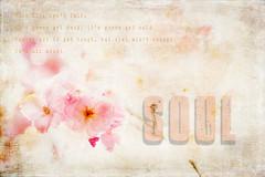 (Seven_Seas_Photography) Tags: pink colour whiteflower colours textures pinkflower cherryblossom highkey mttamborine kimklassen