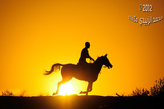 :   1145 (momazo) Tags: sunset horse sun silhouette night mare run knight     faras