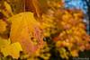 Bunte Blätter 12.11.2012