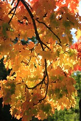 autumn (Eifeelgood) Tags: autumn trees tree fall favorites indiansummer eifeelgood magiceifel
