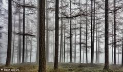 Loenermark E (Daan van Os) Tags: winter mist natuur bos landschap lariks loenermark landschapsfoto lariksbos