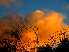 nov2012 nov 28th orange clouds (rospix) Tags: uk november autumn sunset sky orange cloud nature silhouette wales clouds countryside hedge 2012 rospix